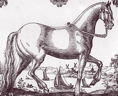 Mały ,cętkowany koń, przeznaczonego do polowań w stylu par force,