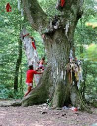 Drzewo sobótkowe