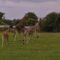 Największe safari Europy Północnej – Knuthenborg Safaripark